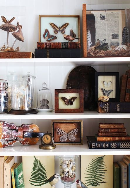 shelves with butterflies in frames