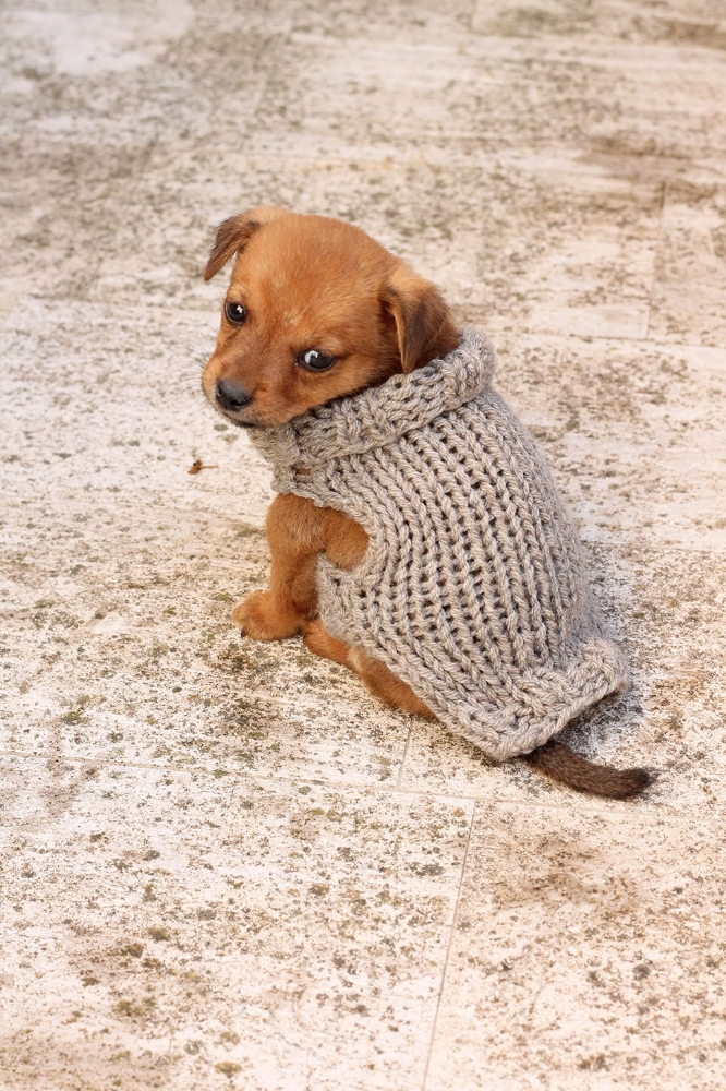 small puppy sweater