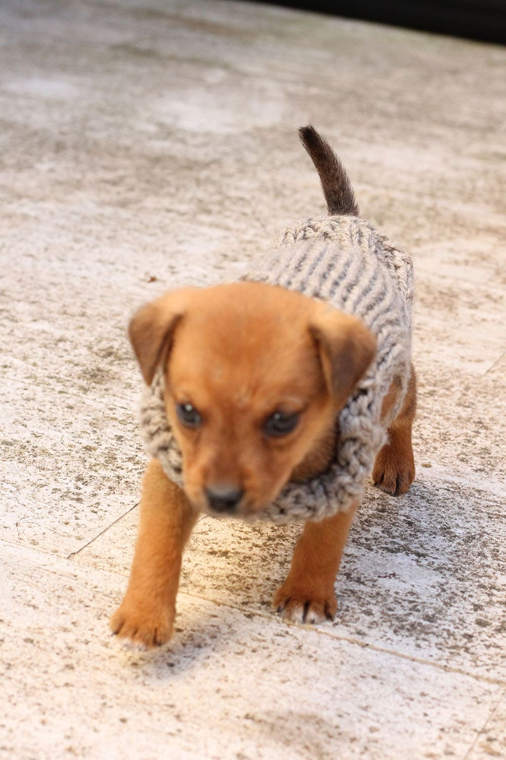 free-puppy-sweater-pattern