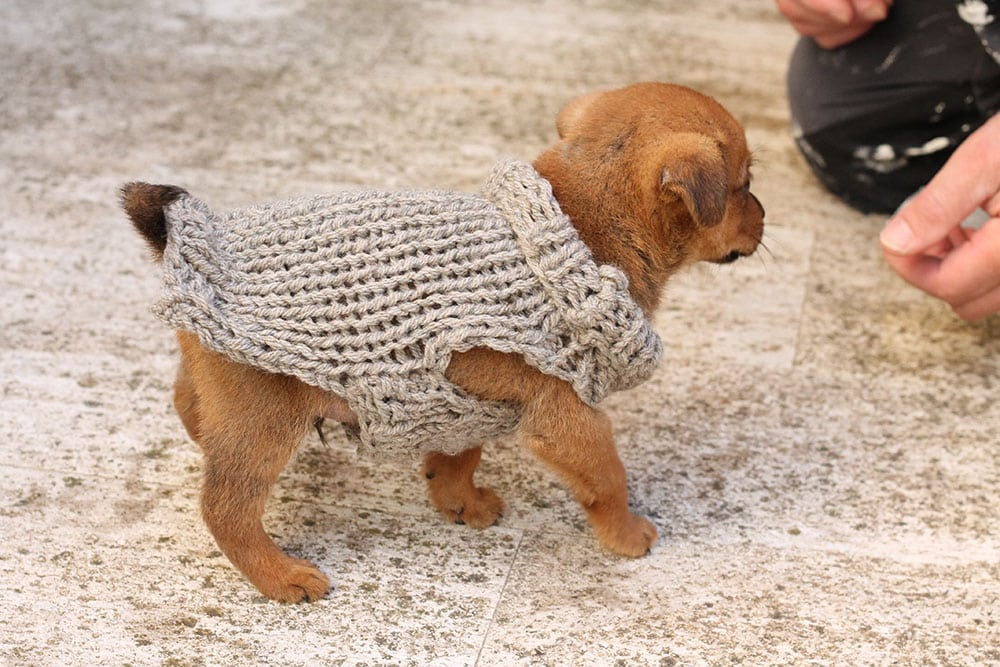 free-puppy-sweater-small-pattern