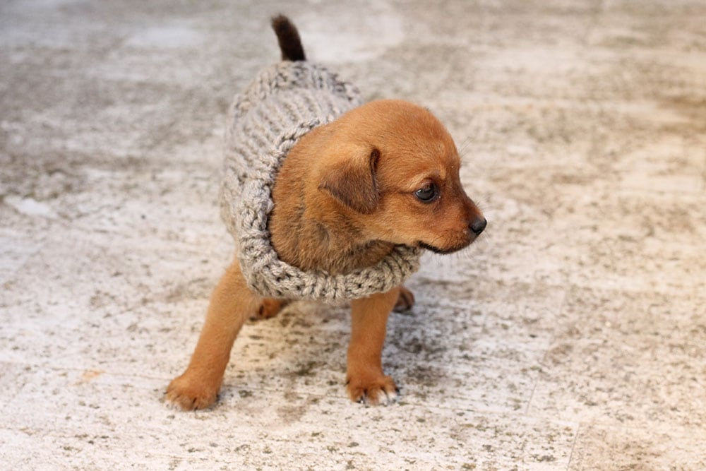 puppy-sweater-knitted