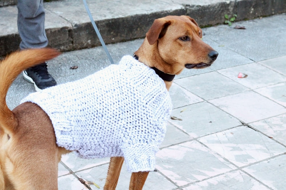 fall-dog-sweater