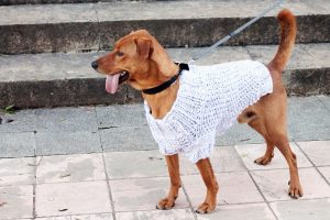 dog sweater knitting pattern free