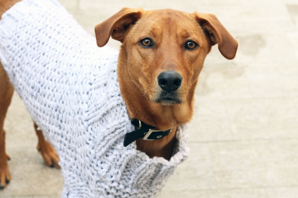 chunky knit dog sweater