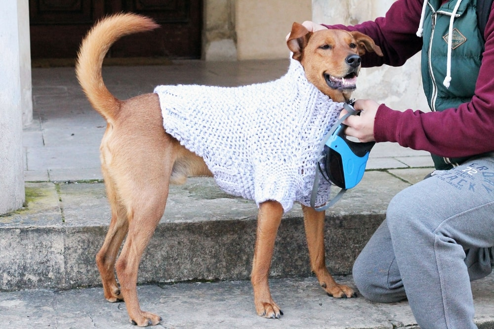 dog+sweater+free+pattern.jpg