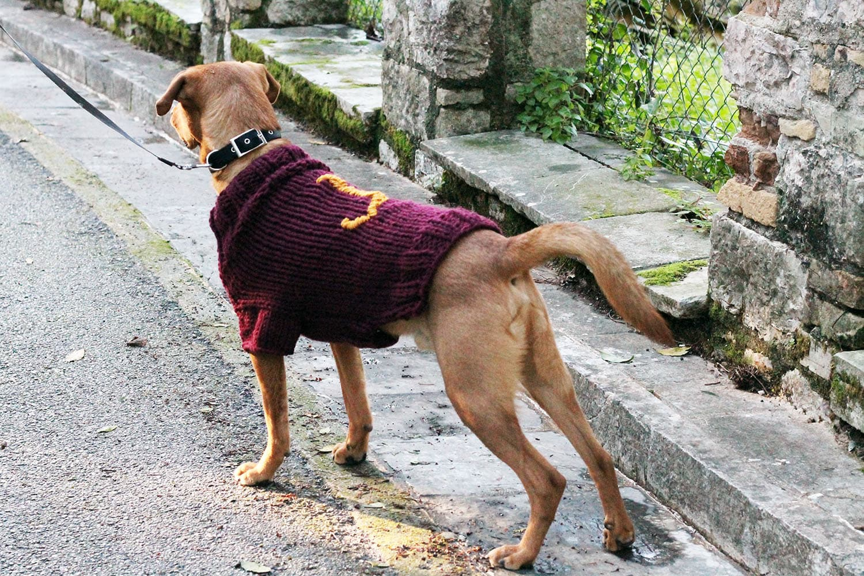 harry potter dog sweater knitting pattern