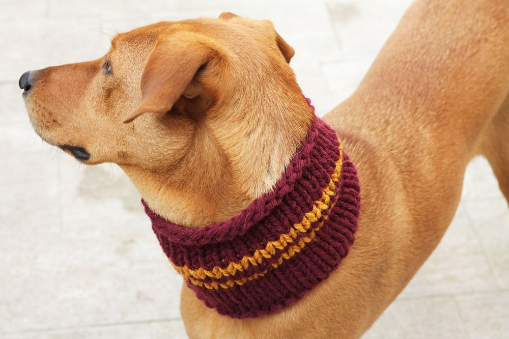 knitted dog scarf