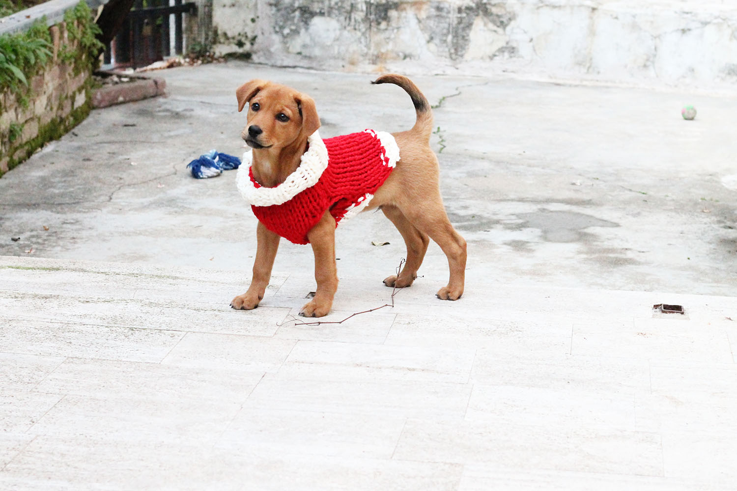 knitted-dog-sweaters