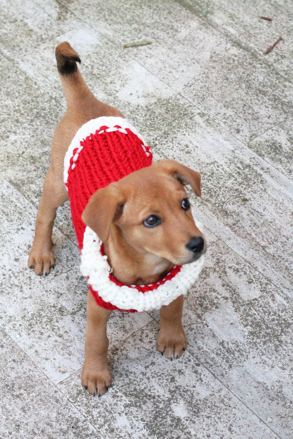 puppy-christmas-sweater-knitting-pattern