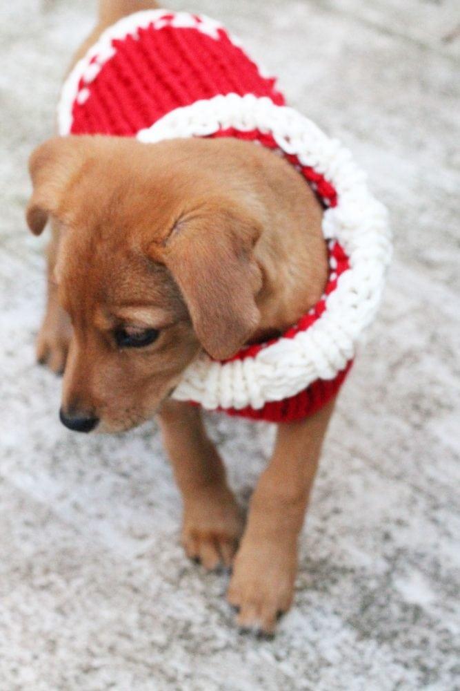 small-dog-sweater