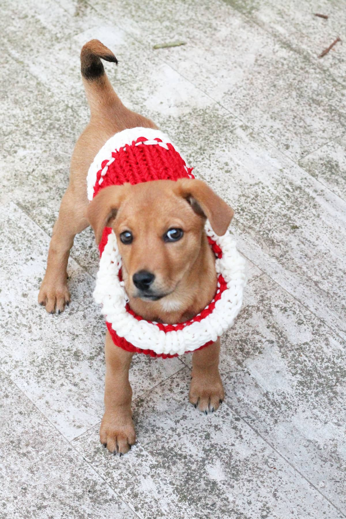 small-puppy-knitted-sweater