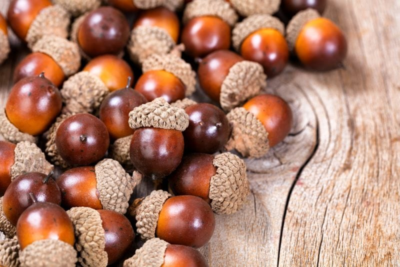 Acorns on a wooden table