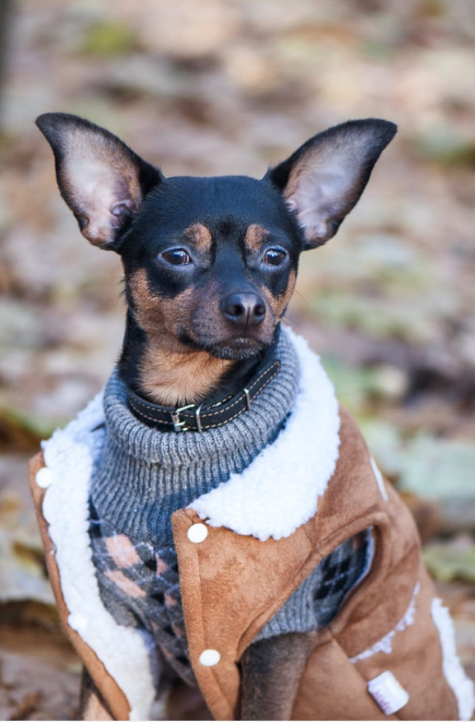 10 Stunning Examples Of Beautiful Fall Dog Sweaters