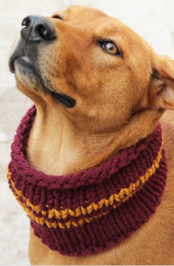 Dog Cowl Pattern {Gryffindor House Colours}