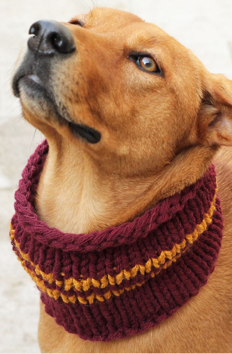 Pet Knitting Patterns Archives Handy Little Me