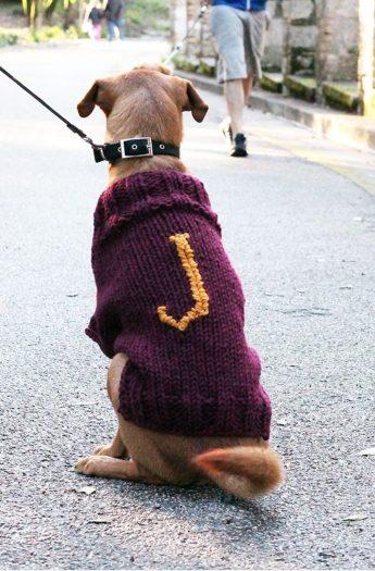 Dog Sweater Knitting Pattern | Mischief Managed