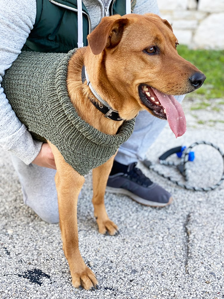 dog wearing a knitted sweater