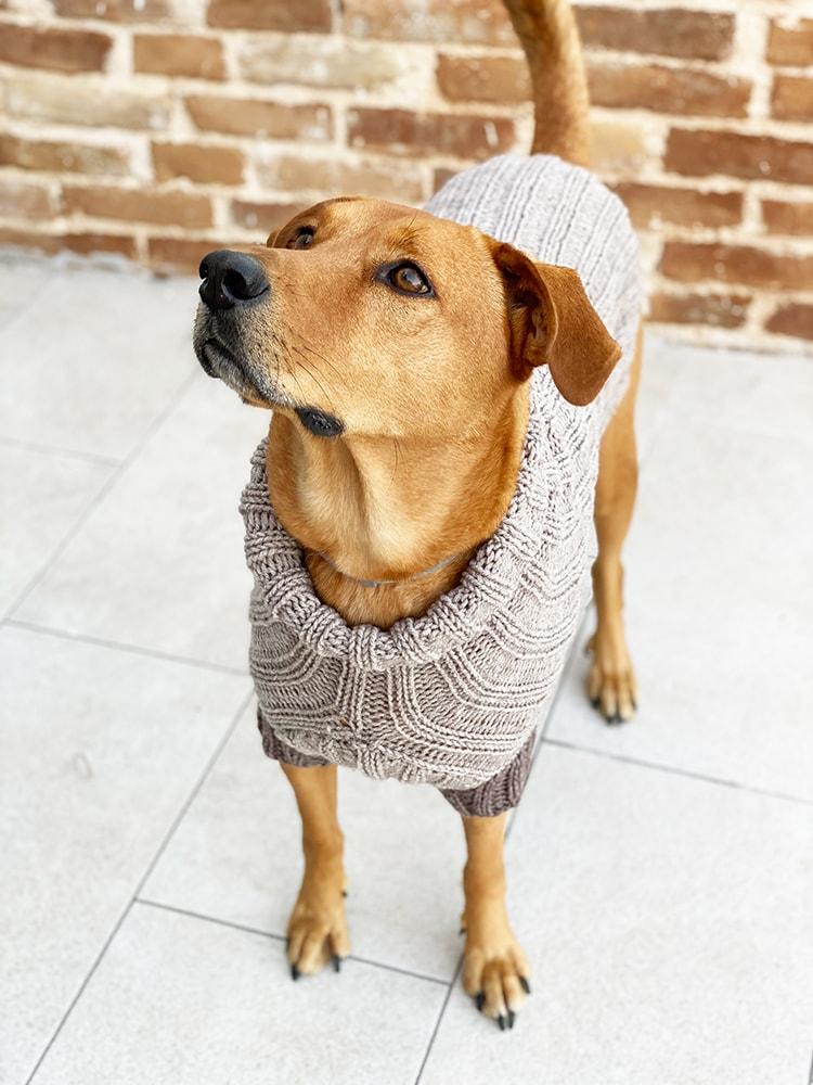 knitted dog jumper