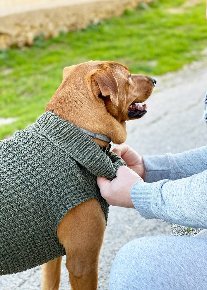 dog sweater knit in dk yarn with a turtleneck