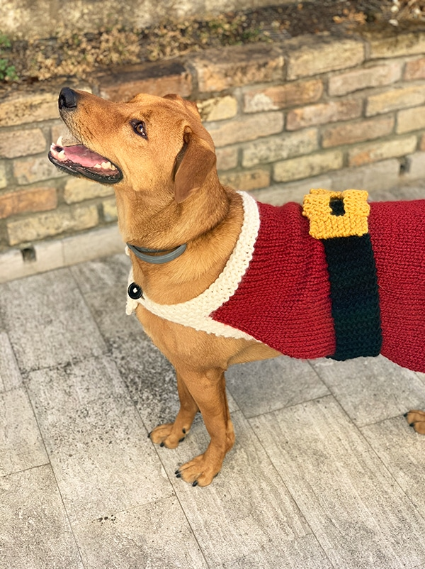 dog wearing a knitted Santa Claus coat