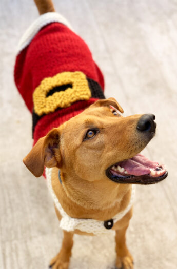 Santa Claus Dog Coat Pattern