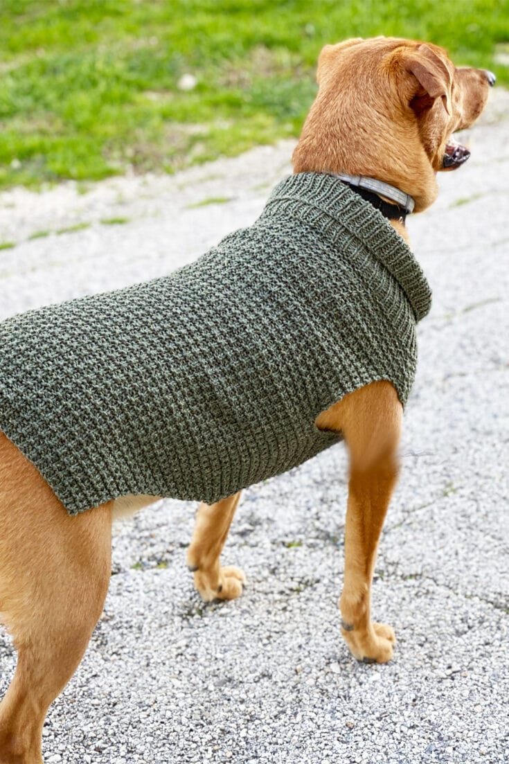 Dog Sweater Knitting Pattern {Straight Needles}