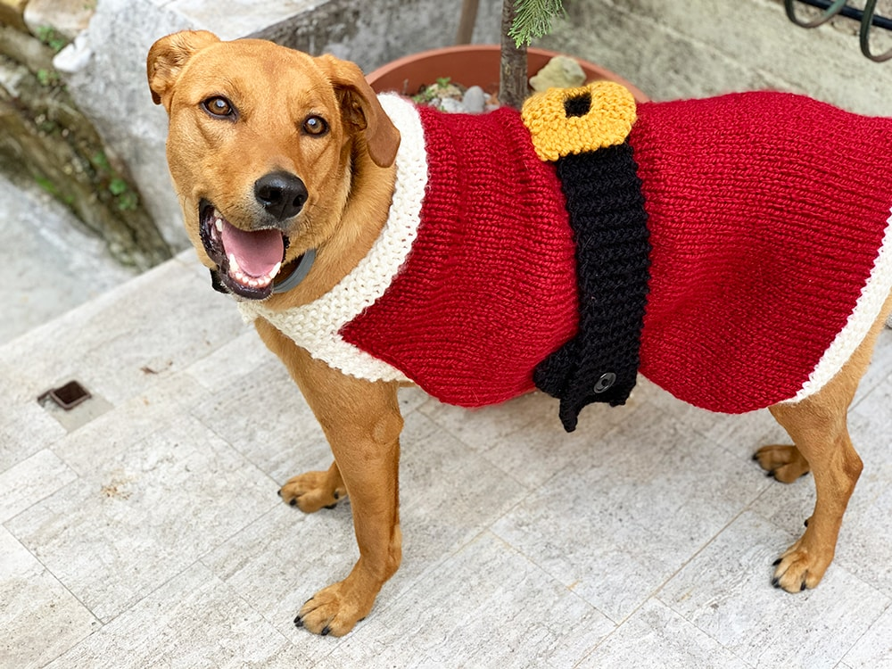 Dog wearing a knitted santa claus sweater