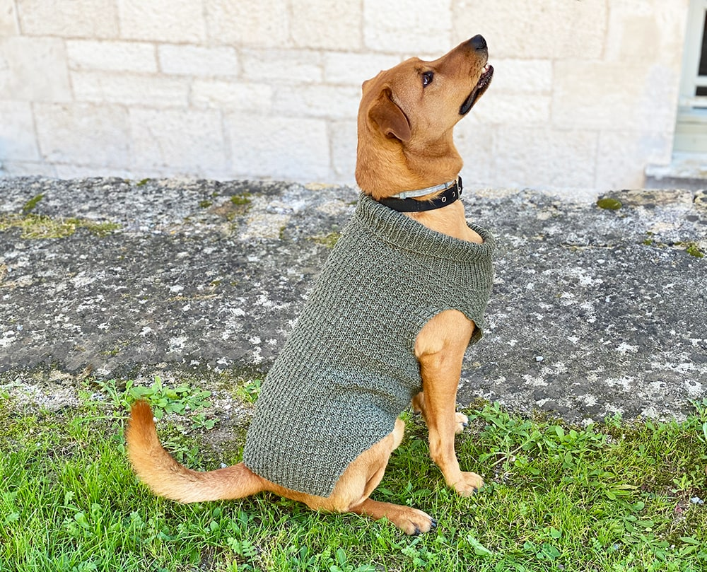 large dog sweater knit in double knitting yarn