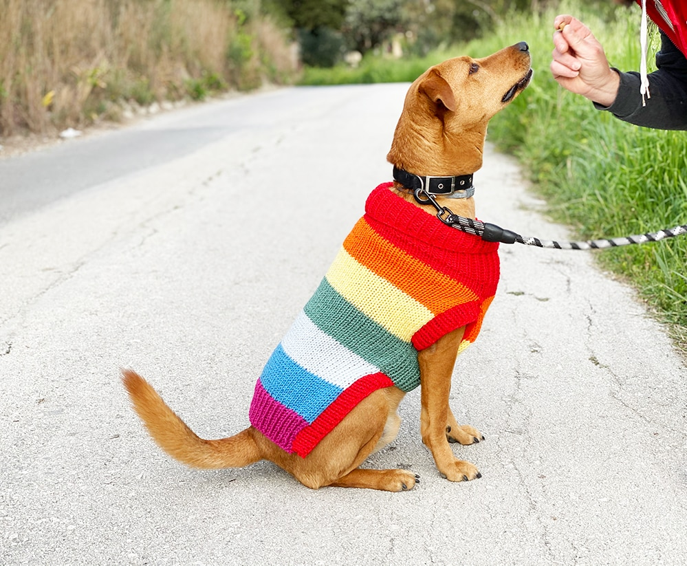 dog jumper with rainbow stripes