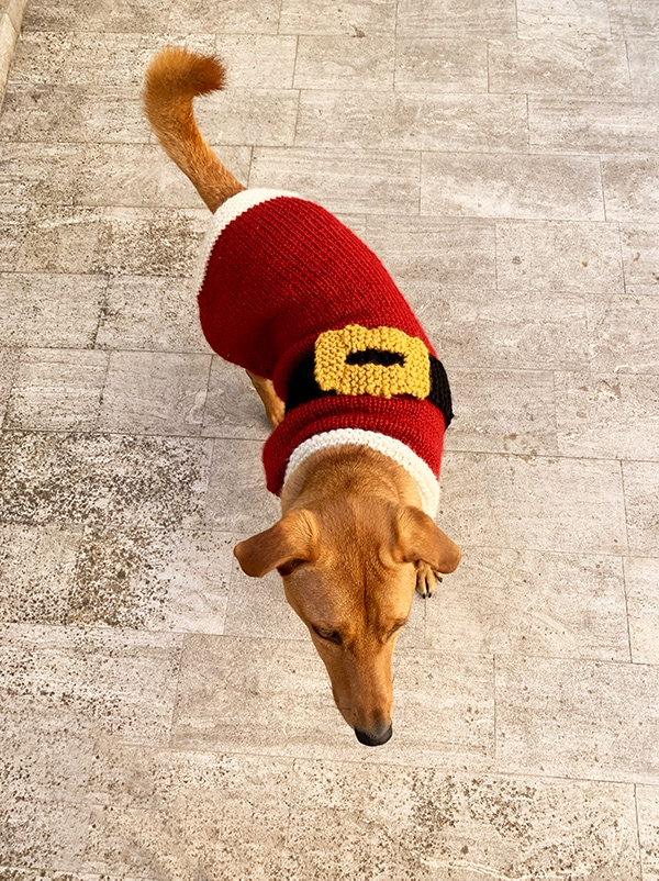 Santa Claus knitted dog sweater