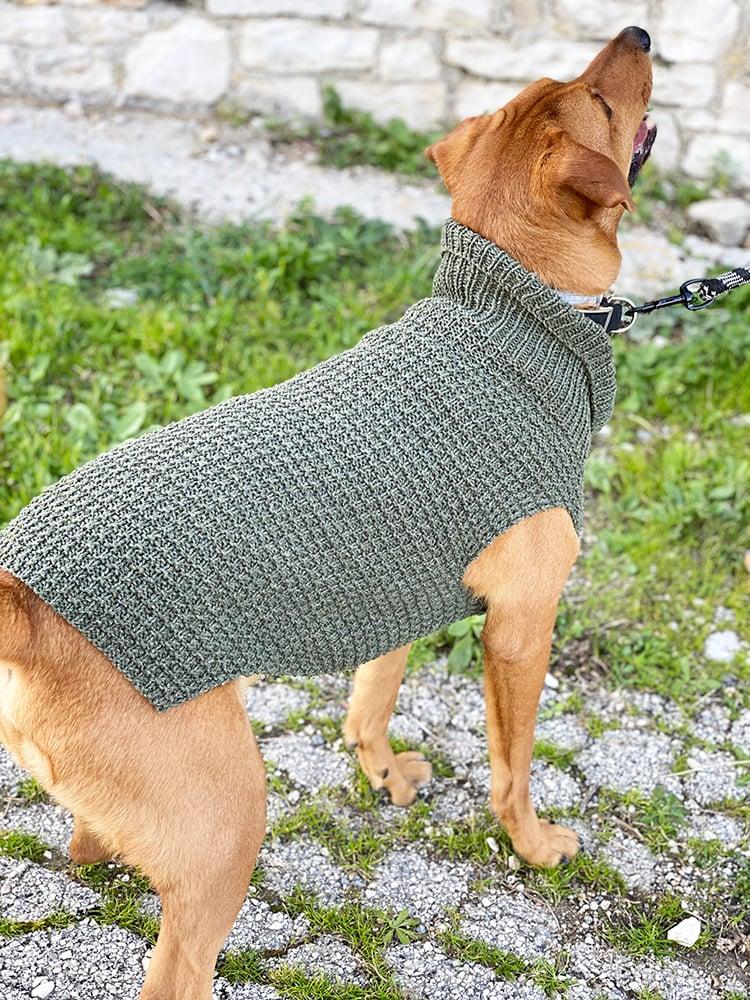 large dog sweater