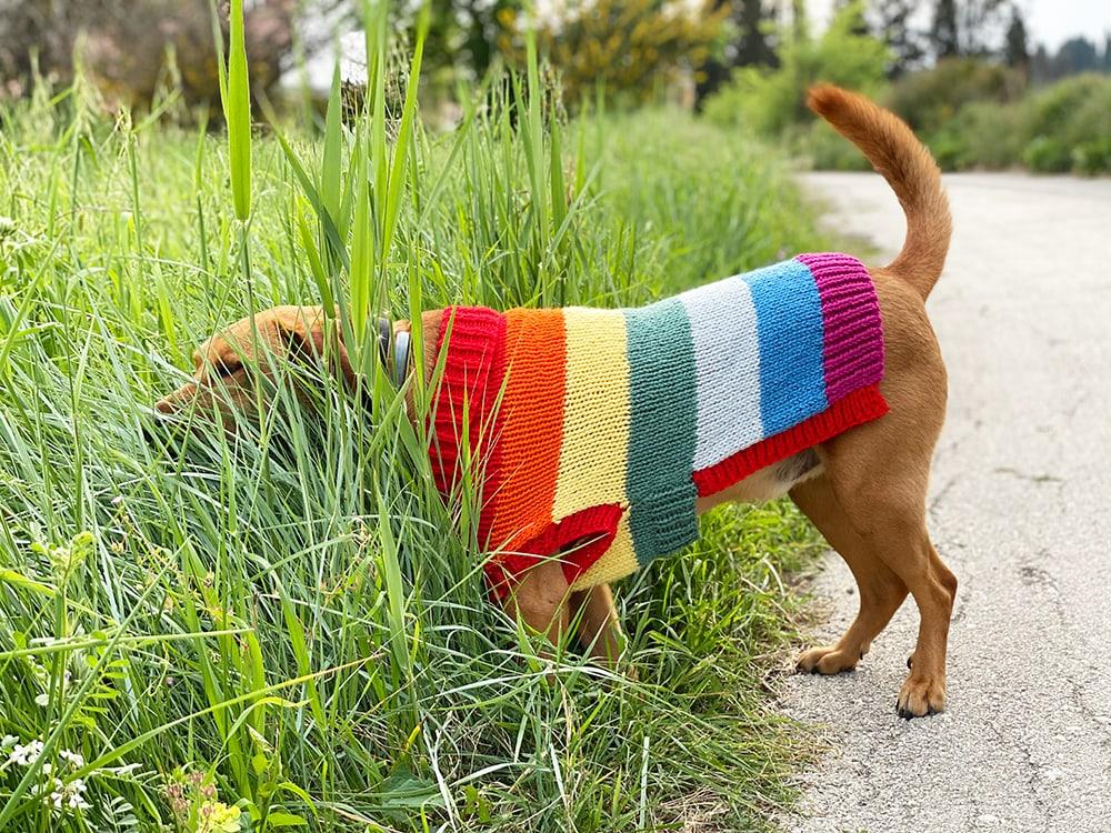 rainbow dog jumper