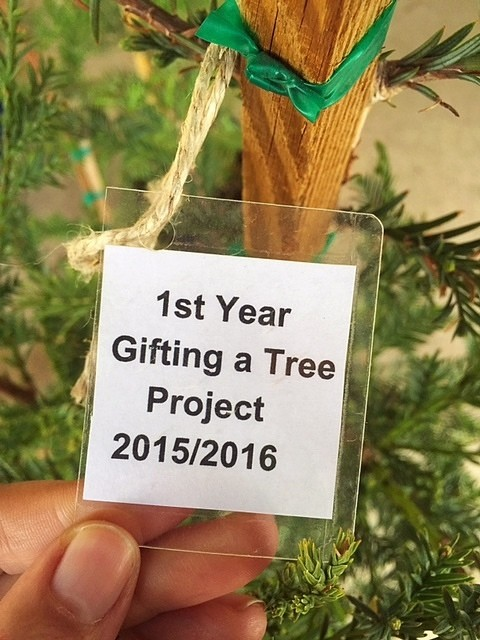 Cobb Gifting Tree