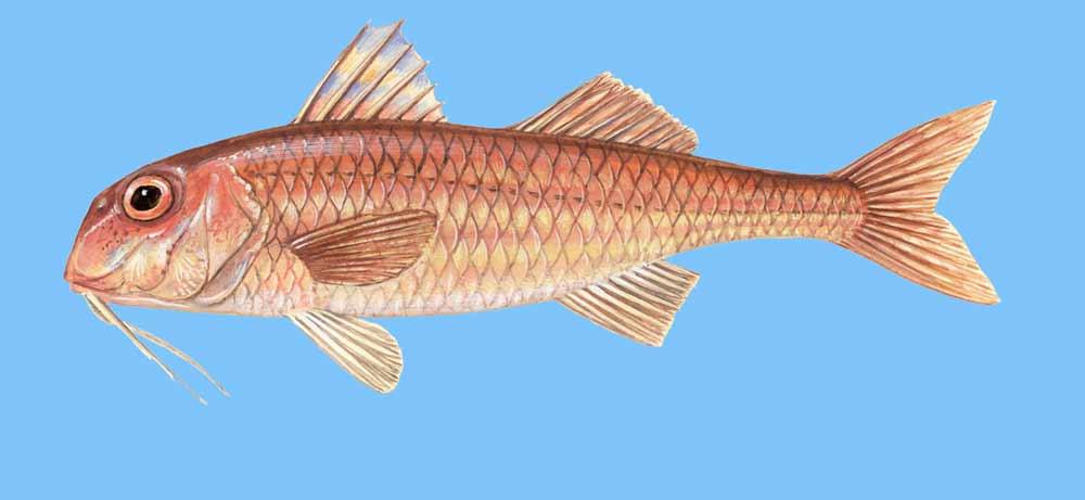 γνωριμίες sites ψάρι όνομαδωρεάν ιστοσελίδες γνωριμιών Γουόρναμπουλ