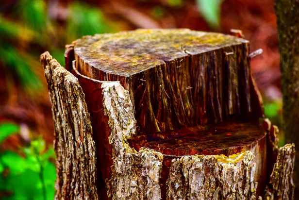 tilt shift photo of log