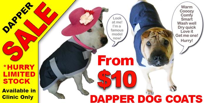 Dapper-Dog-Coat-Sale
