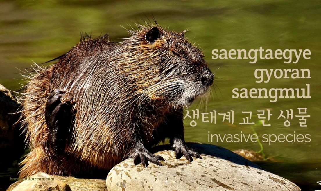 saengtaegye gyoran saengmul - invasive species