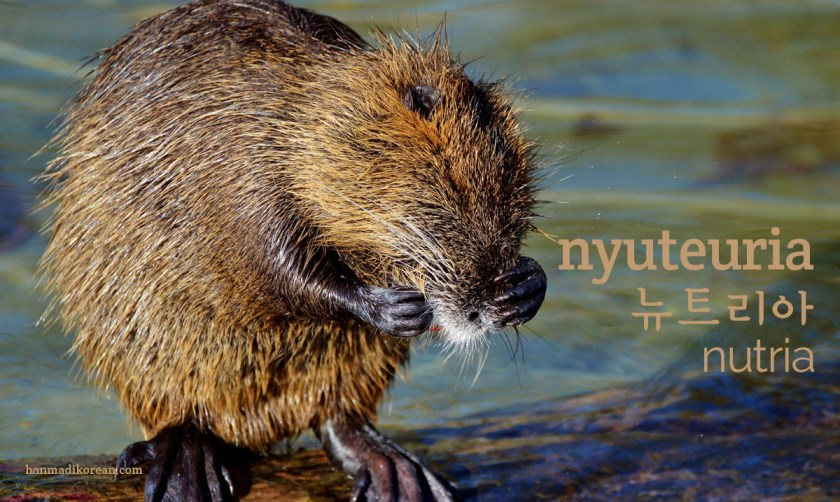 nyuteuria - Korean for nutria