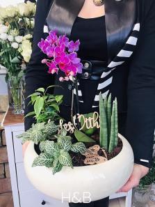 különleges orchidea beültetés