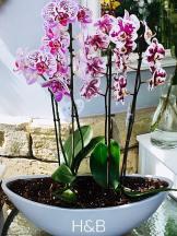 csónakba ültetett orchidea
