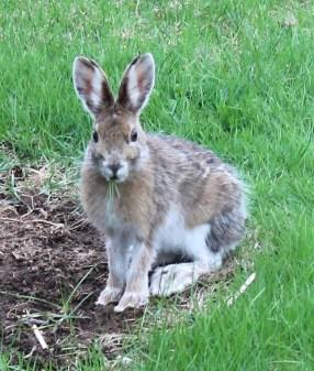 bernie-the-bunny-01