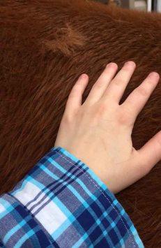 horses-shedding