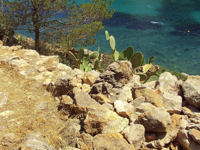 Rocks and cactus overlooking sea
