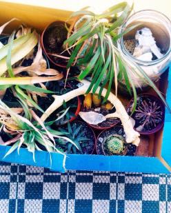 Plant babies.