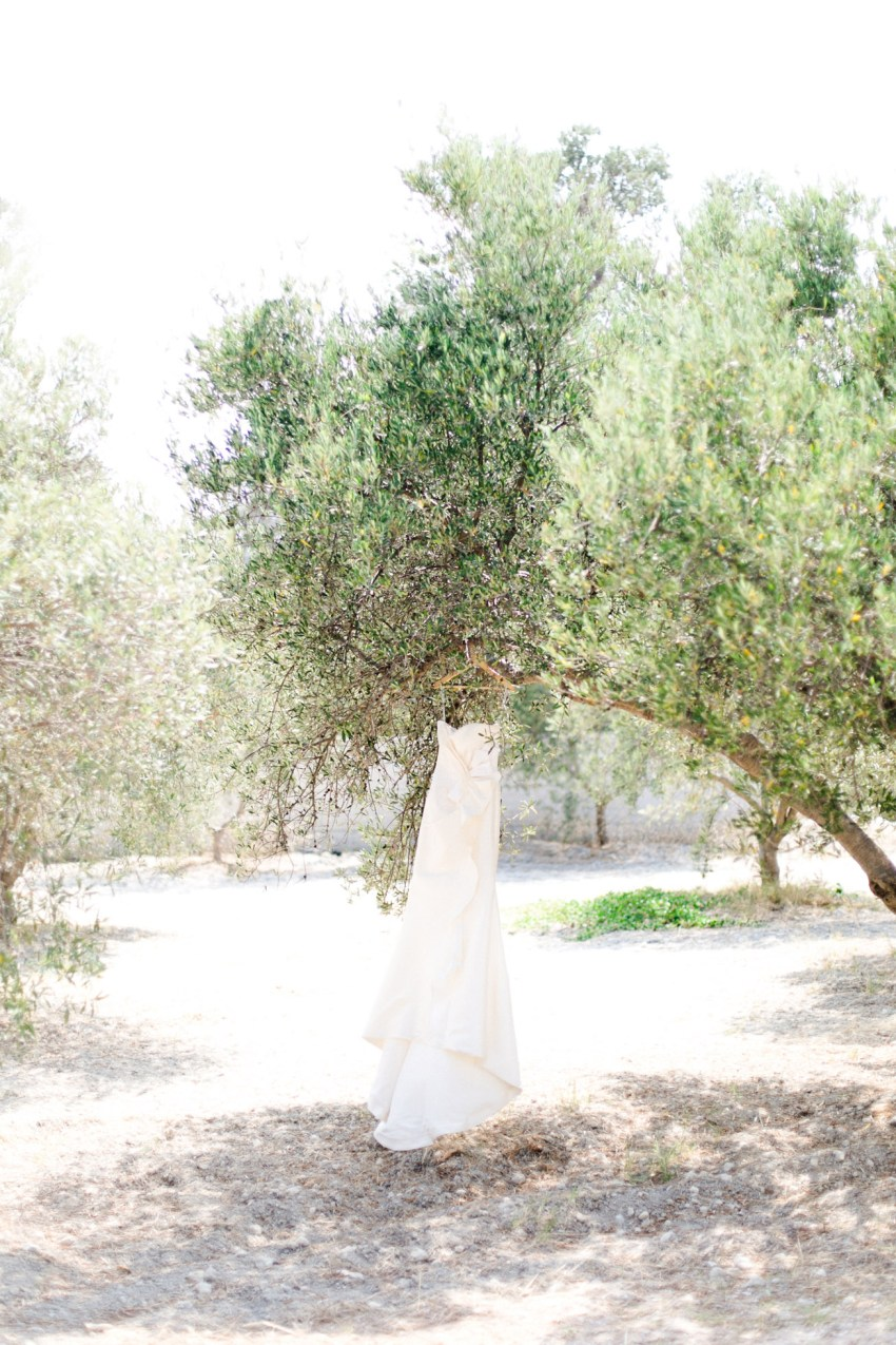 Designer bridal dress hanging over an olive tree.