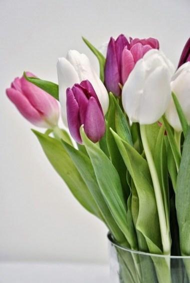 eb3e0-tulip2b0061