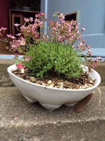 Ceramic planter, garden planter, RHS, RHS Spring Show