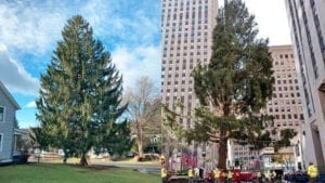 DE BLASIO'S NYC: Rockefeller Christmas Tree Mostly Destroyed in Transit, City Can't Erect Properly