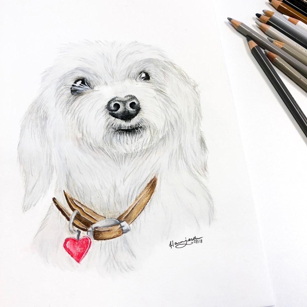 Animal Portrait Drawing Dog Molly