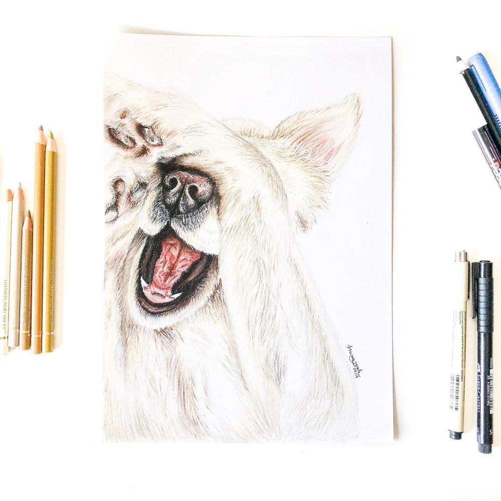 Animal Portrait Golden Retriever Nell